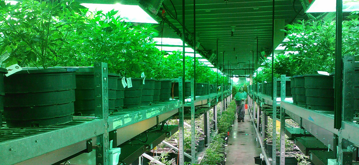 How to Keep your Marijuana Facilities from Going up in Smoke: 5 Design Considerations